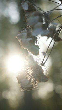 Stimmung Herbst Gräser Oktober Trauer Pflanze
